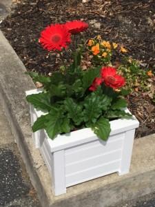 White flower box